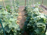 wcmg2012_Garden