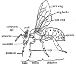 Beepartsdiagram