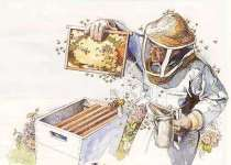 beekeeper at hive