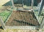 my_reap_garden-20130225-dscn1586