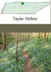 taylorhollow