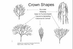 Kuitert Crown Shapes