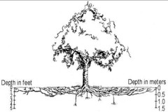 Tree Roots Shallower Than You Think