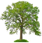 tree_1220034_0