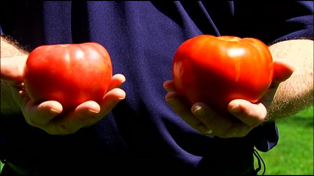 two_tomatoes