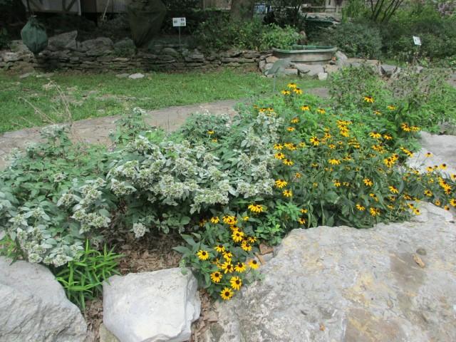 cedars_of_lebanon_butterfly_garden_lrobertson-20140908-img_3751