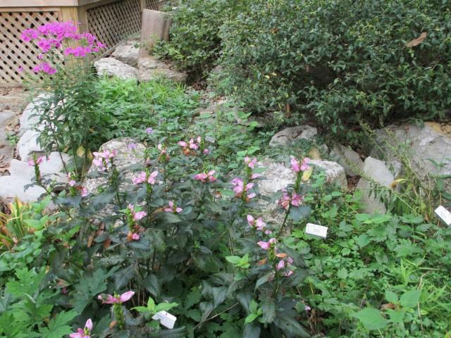 cedars_of_lebanon_butterfly_garden_lrobertson-20140908-img_3757