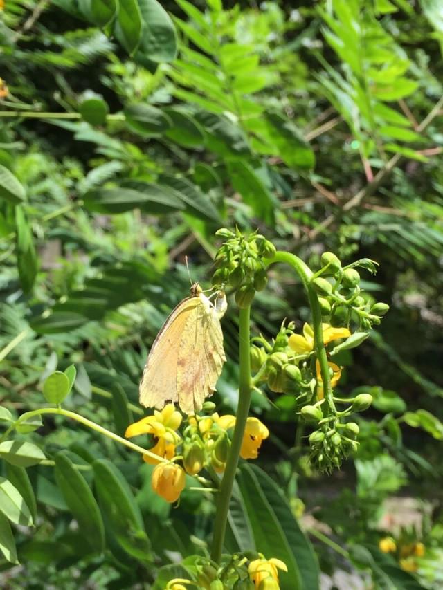 linda_robertson_cedars_butterfly_garden-20150809-IMG_2028