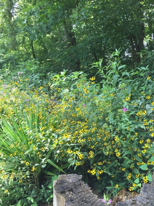 linda_robertson_cedars_butterfly_garden-20150809-IMG_2049