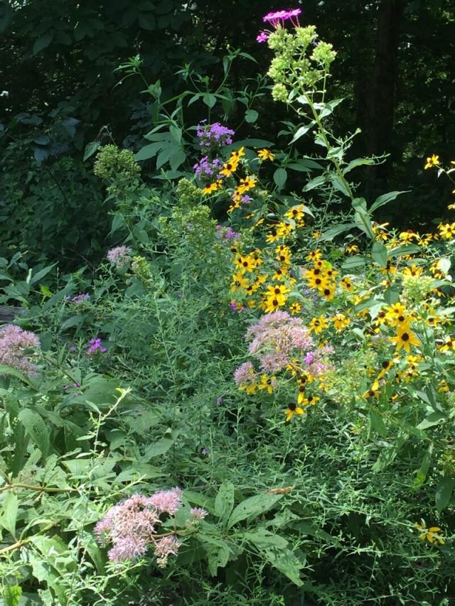 linda_robertson_cedars_butterfly_garden-20150809-IMG_2051
