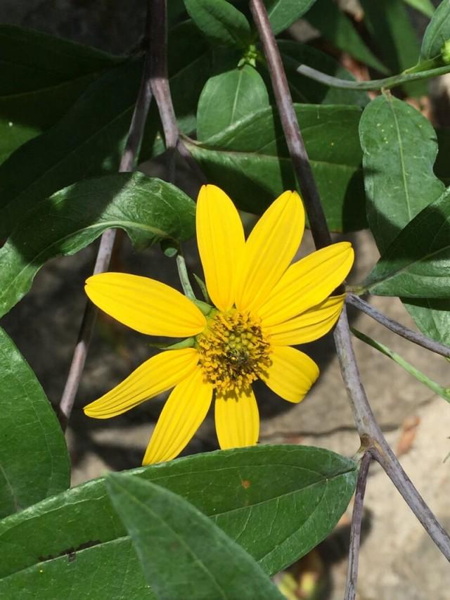 linda_robertson_cedars_butterfly_garden-20150809-IMG_2052