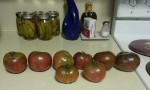 2013 Harvest - the tomatoes are getting scarce - 17 August 2013