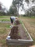 Fall 2013 Raised Beds - planting garlic on 27 October 2013