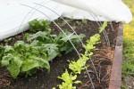 Spring 2014 Raised Beds - kale, lettuce, radish, spinach - 07 April 2014