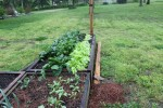 Spring 2014 Raised Beds - kale, lettuce, radish, spinach - 25 April 2014